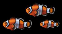 left-fish-1